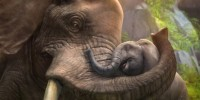 Zoo Tycoon را به رایگان برروی ایکسباکس وان دریافت کنید