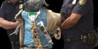 دومین فرد حملات DDOS به PlayStation و Xbox دستگیر شد | مارمولک در بند پلیس