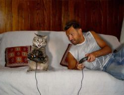 تماشاخانه شماره #95 | گربههای لوسِِِ بی خاصیت!