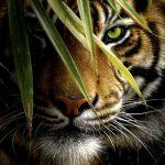 تصویر پروفایل purmonto