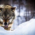 تصویر پروفایل Alone wolf 2018